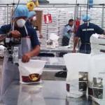 Personal para picos altos de producción